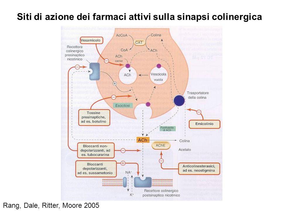 Rang, Dale, Ritter, Moore 2005 Siti di azione dei farmaci attivi sulla sinapsi colinergica