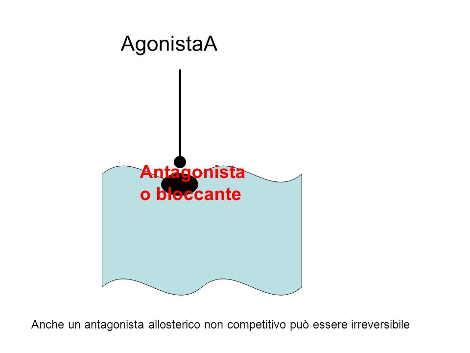AgonistaA Antagonista o bloccante Anche un antagonista allosterico non competitivo può essere irreversibile