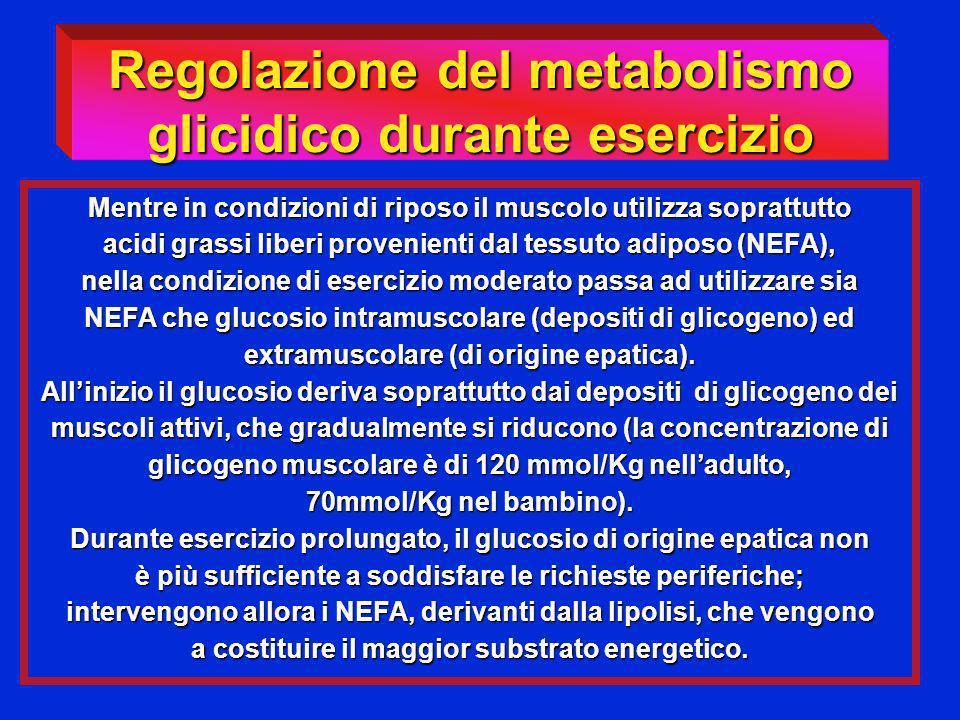 Mentre in condizioni di riposo il muscolo utilizza soprattutto acidi grassi liberi provenienti dal tessuto adiposo (NEFA), nella condizione di eserciz