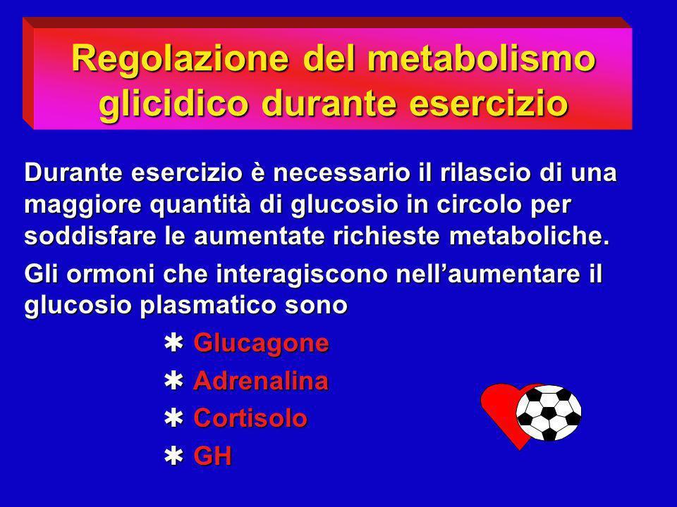 Durante esercizio è necessario il rilascio di una maggiore quantità di glucosio in circolo per soddisfare le aumentate richieste metaboliche. Gli ormo