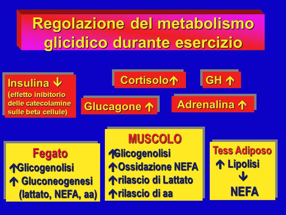 Insulina Insulina ( effetto inibitorio delle catecolamine sulle beta cellule) Insulina Insulina ( effetto inibitorio delle catecolamine sulle beta cel