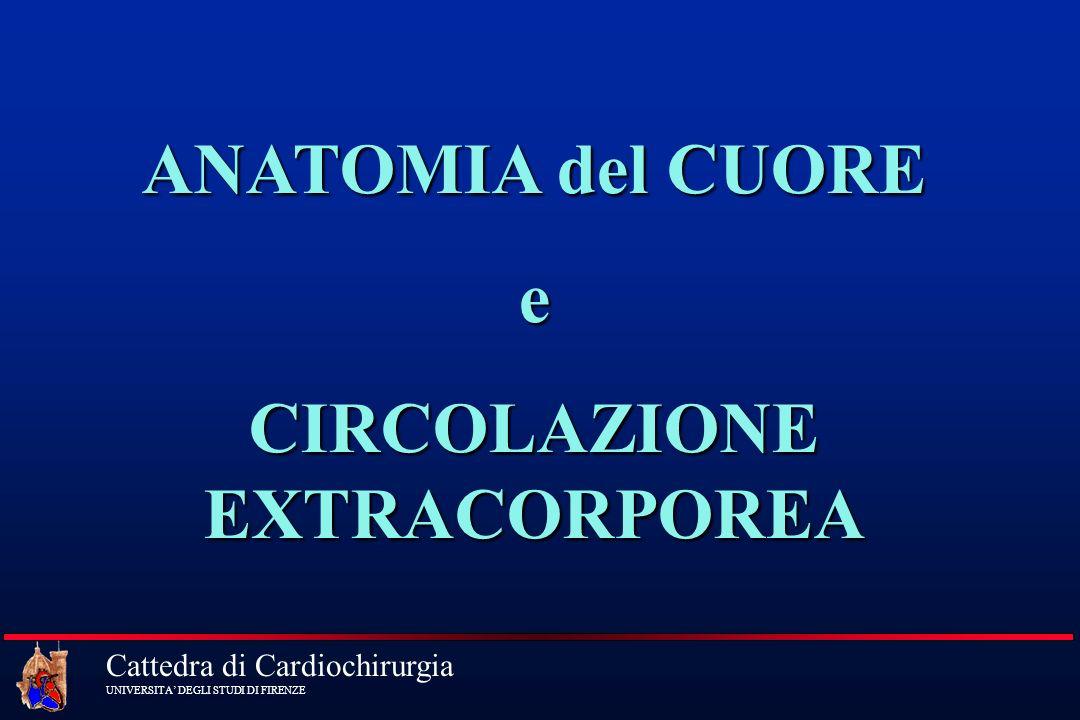 Cattedra di Cardiochirurgia UNIVERSITA DEGLI STUDI DI FIRENZE ANATOMIA del CUORE e CIRCOLAZIONE EXTRACORPOREA