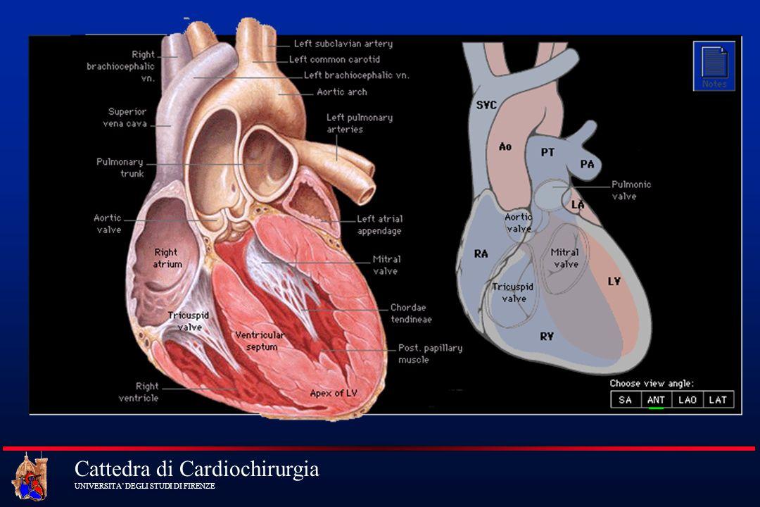 Cattedra di Cardiochirurgia UNIVERSITA DEGLI STUDI DI FIRENZE Schema Circuito per CPB