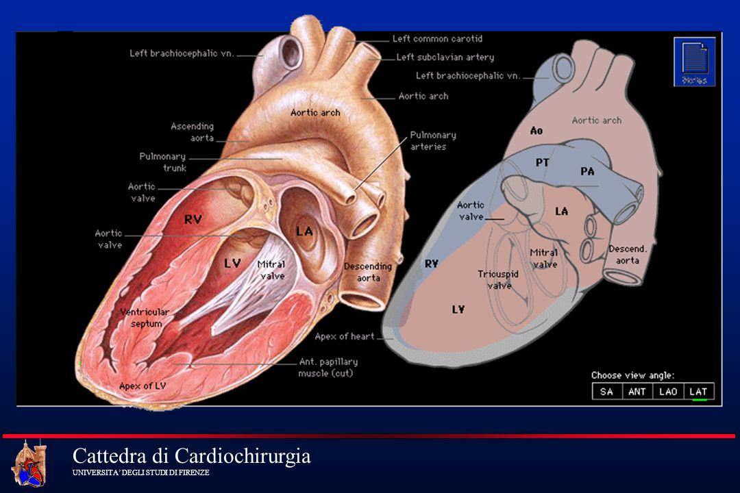 Cattedra di Cardiochirurgia UNIVERSITA DEGLI STUDI DI FIRENZEMonitorizzazione ECG (5 leads)ECG (5 leads) PA e PVCPA e PVC SW CatheterSW Catheter Renal OutputRenal Output Sonde Termiche (esofagea e rettale)Sonde Termiche (esofagea e rettale) PulsossimetroPulsossimetro
