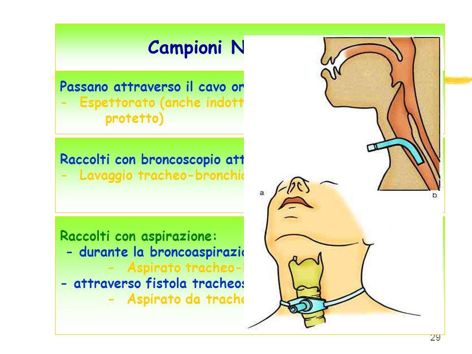29 Campioni NON protetti Passano attraverso il cavo orale: - Espettorato (anche indotto, protetto) Raccolti con broncoscopio attraverso il cavo orale: