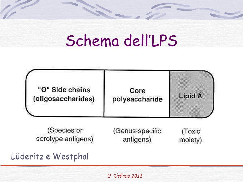 Schema dellLPS Lüderitz e Westphal