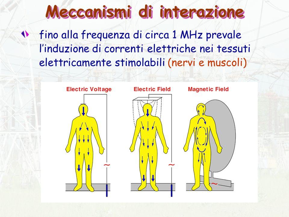 Meccanismi di interazione fino alla frequenza di circa 1 MHz prevale linduzione di correnti elettriche nei tessuti elettricamente stimolabili (nervi e muscoli)