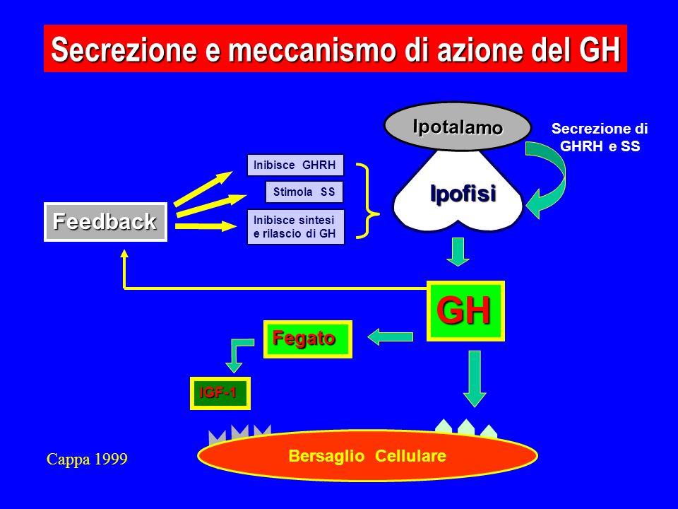Feedback Inibisce GHRH Stimola SS Inibisce sintesi e rilascio di GH GH Ipotalamo Ipofisi Secrezione di GHRH e SS Secrezione e meccanismo di azione del GH Bersaglio Cellulare Fegato IGF-1 Cappa 1999