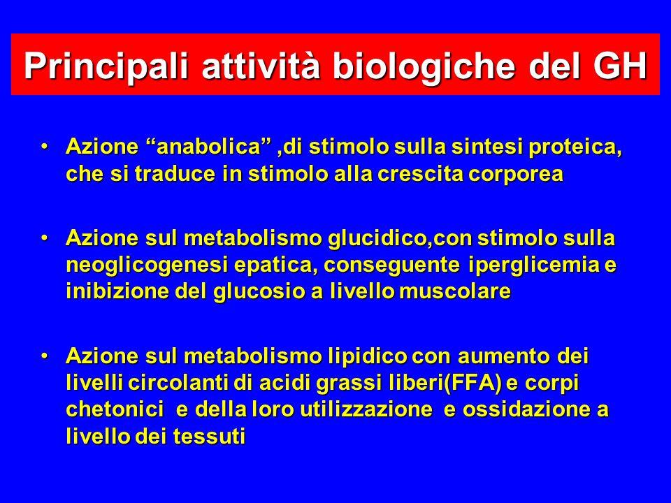 Principali attività biologiche del GH Azione anabolica,di stimolo sulla sintesi proteica, che si traduce in stimolo alla crescita corporeaAzione anabolica,di stimolo sulla sintesi proteica, che si traduce in stimolo alla crescita corporea Azione sul metabolismo glucidico,con stimolo sulla neoglicogenesi epatica, conseguente iperglicemia e inibizione del glucosio a livello muscolareAzione sul metabolismo glucidico,con stimolo sulla neoglicogenesi epatica, conseguente iperglicemia e inibizione del glucosio a livello muscolare Azione sul metabolismo lipidico con aumento dei livelli circolanti di acidi grassi liberi(FFA) e corpi chetonici e della loro utilizzazione e ossidazione a livello dei tessutiAzione sul metabolismo lipidico con aumento dei livelli circolanti di acidi grassi liberi(FFA) e corpi chetonici e della loro utilizzazione e ossidazione a livello dei tessuti