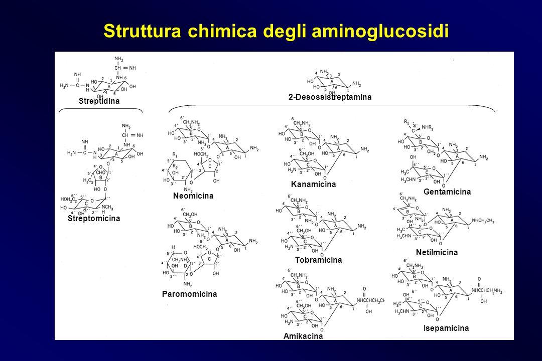 Struttura chimica degli aminoglucosidi Streptidina Streptomicina 2-Desossistreptamina Neomicina Kanamicina Paromomicina Tobramicina Amikacina Gentamic