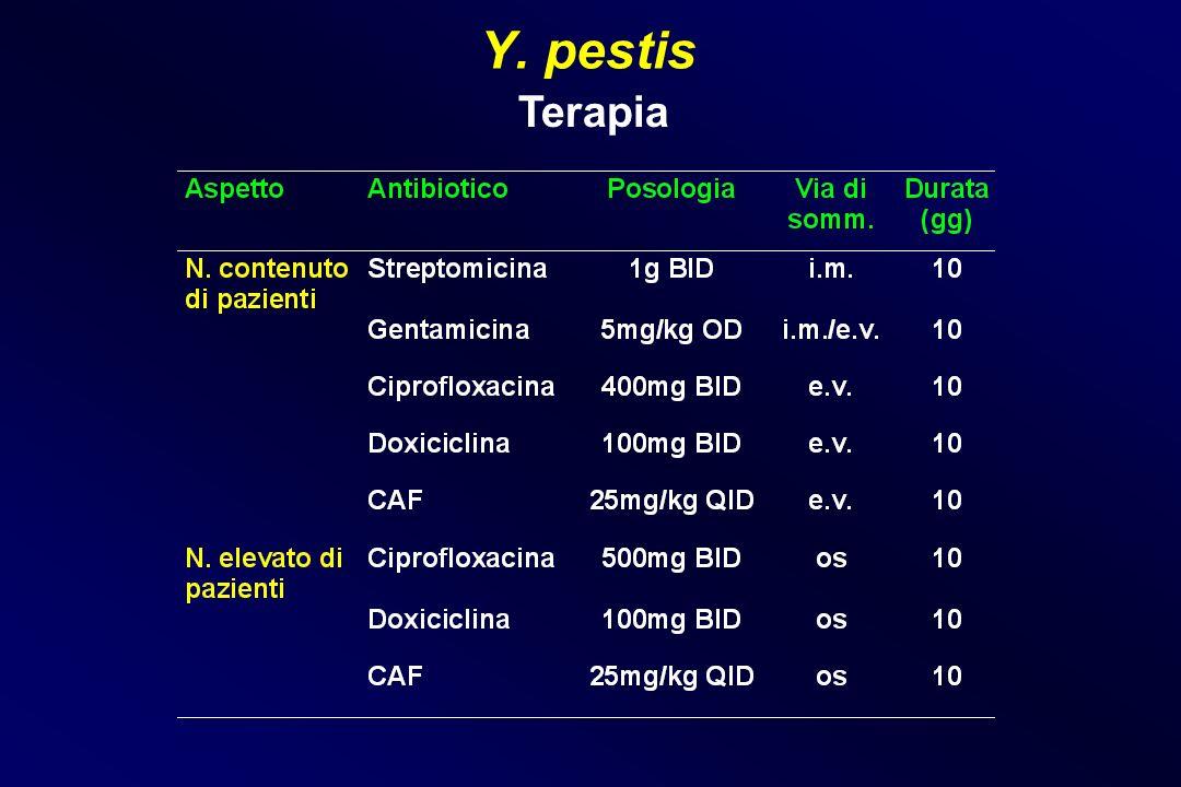 Y. pestis Terapia