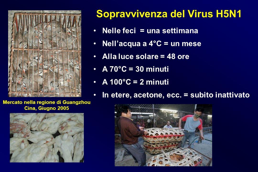 Sopravvivenza del Virus H5N1 Nelle feci = una settimana Nellacqua a 4°C = un mese Alla luce solare = 48 ore A 70°C = 30 minuti A 100°C = 2 minuti In e