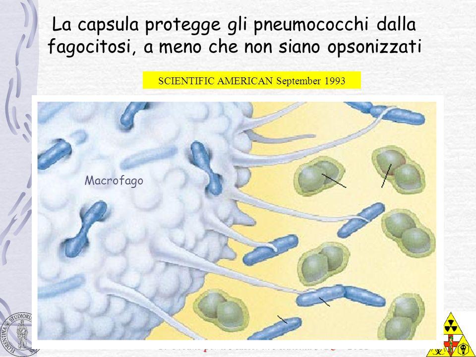 F. Urbano per il Master in Medicina NBC – 2011 La capsula protegge gli pneumococchi dalla fagocitosi, a meno che non siano opsonizzati Macrofago SCIEN