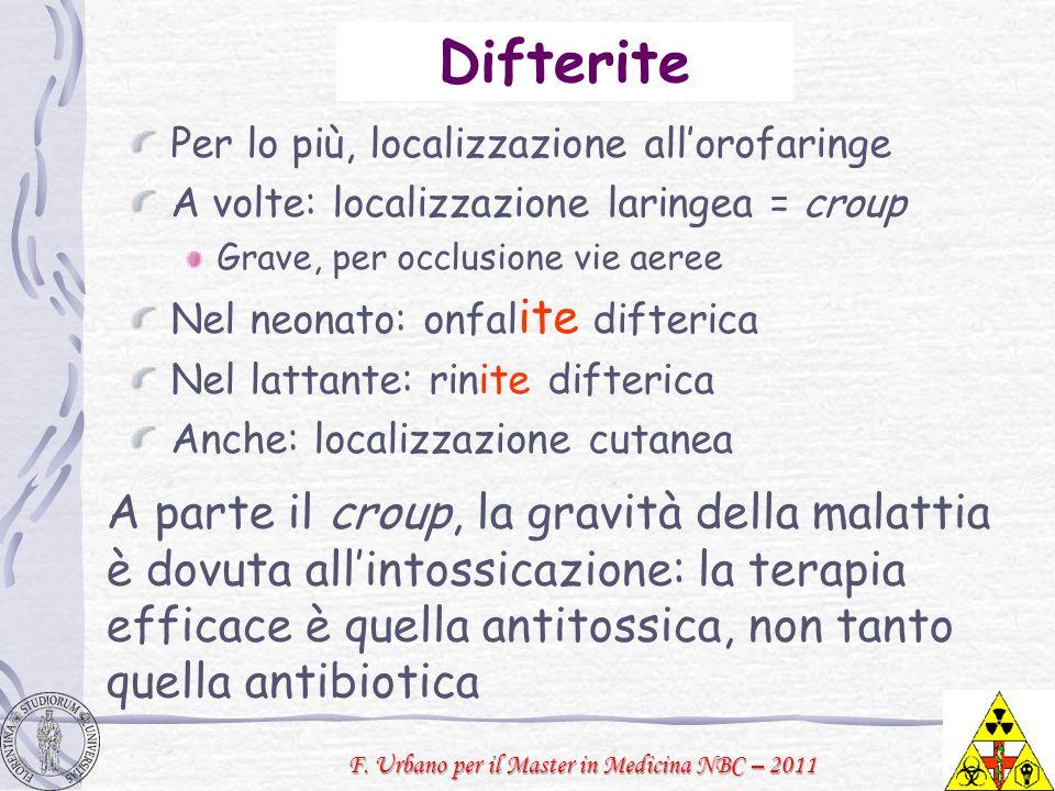 F. Urbano per il Master in Medicina NBC – 2011 Difterite Per lo più, localizzazione allorofaringe A volte: localizzazione laringea = croup Grave, per