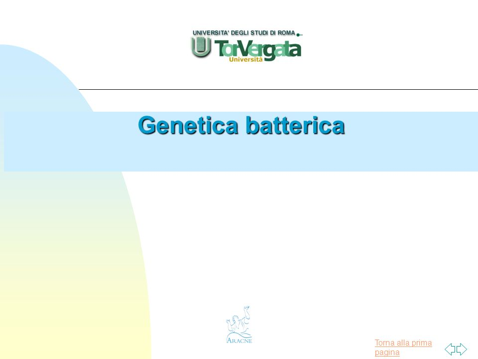 Torna alla prima pagina Conjugation n Significance u Gram - bacteria F Antibiotic resistance F Rapid spread u Gram + bacteria F Production of adhesive material by donor cells