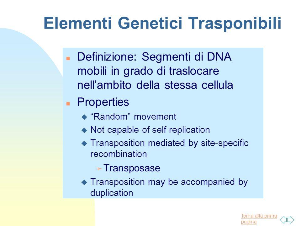 Torna alla prima pagina Elementi Genetici Trasponibili n Definizione: Segmenti di DNA mobili in grado di traslocare nellambito della stessa cellula n