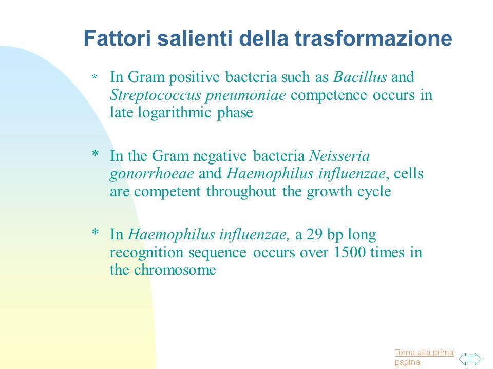 Torna alla prima pagina Fattori salienti della trasformazione * In Gram positive bacteria such as Bacillus and Streptococcus pneumoniae competence occ