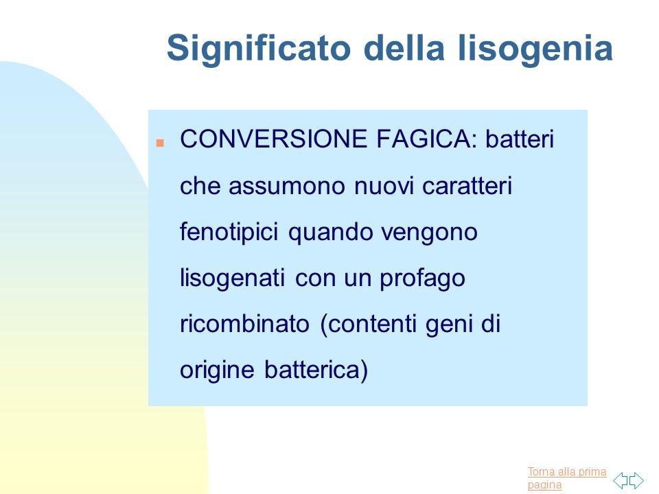 Torna alla prima pagina Significato della lisogenia n CONVERSIONE FAGICA: batteri che assumono nuovi caratteri fenotipici quando vengono lisogenati co