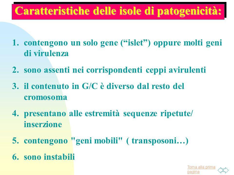 Torna alla prima pagina Caratteristiche delle isole di patogenicità: 1.contengono un solo gene (islet) oppure molti geni di virulenza 2.sono assenti n