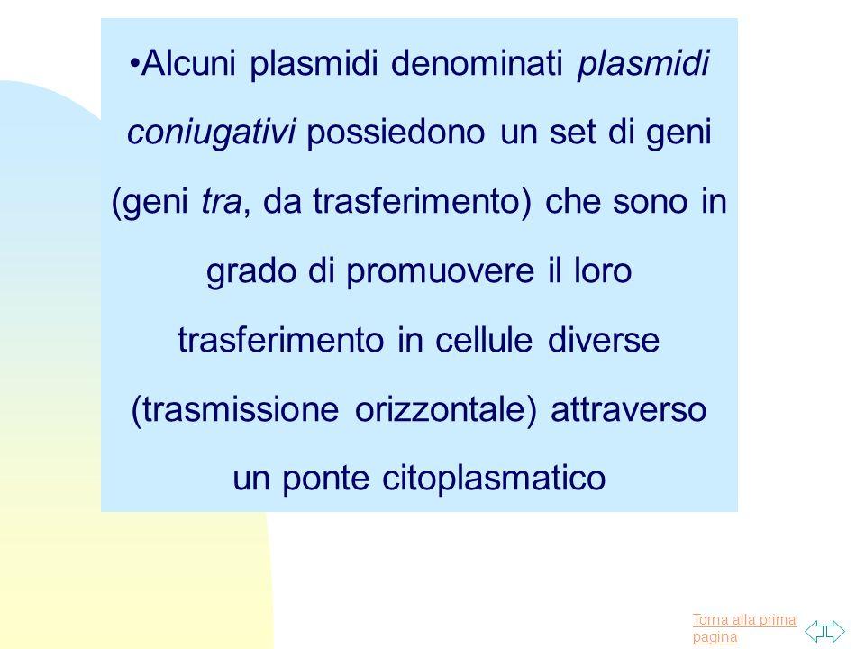 Torna alla prima pagina Alcuni plasmidi denominati plasmidi coniugativi possiedono un set di geni (geni tra, da trasferimento) che sono in grado di pr