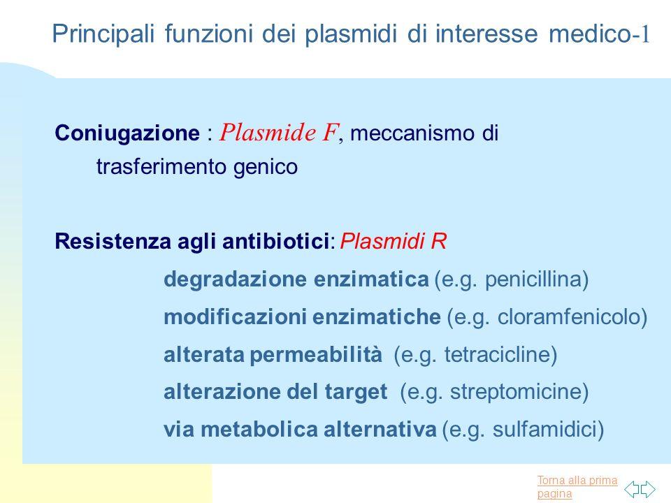 Torna alla prima pagina Principali funzioni dei plasmidi di interesse medico -2 n Virulenza : fattori di invasione, produzione tossine e colicine n Metabolismo e Catabolismo: e.g., produzione di siderofori
