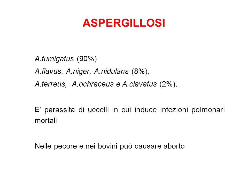 ASPERGILLOSI A.fumigatus (90%) A.flavus, A.niger, A.nidulans (8%), A.terreus, A.ochraceus e A.clavatus (2%).