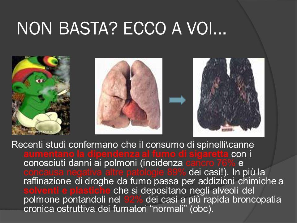 NON BASTA? ECCO A VOI… Recenti studi confermano che il consumo di spinelli\canne aumentano la dipendenza al fumo di sigaretta con i conosciuti danni a