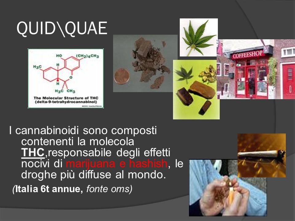 QUID\QUAE I cannabinoidi sono composti contenenti la molecola THC,responsabile degli effetti nocivi di marijuana e hashish, le droghe più diffuse al mondo.