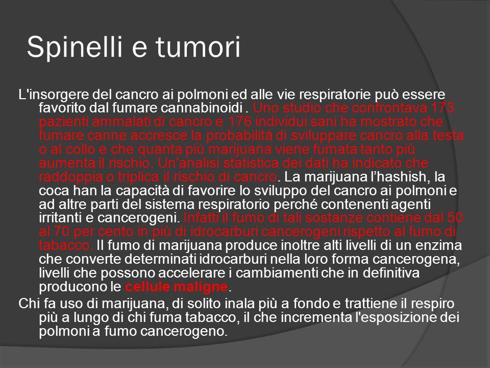 Spinelli e tumori L'insorgere del cancro ai polmoni ed alle vie respiratorie può essere favorito dal fumare cannabinoidi. Uno studio che confrontava 1