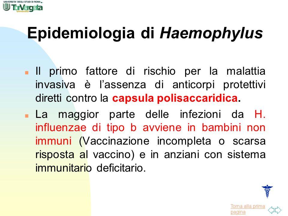 Torna alla prima pagina Epidemiologia di Haemophylus n Il primo fattore di rischio per la malattia invasiva è lassenza di anticorpi protettivi diretti