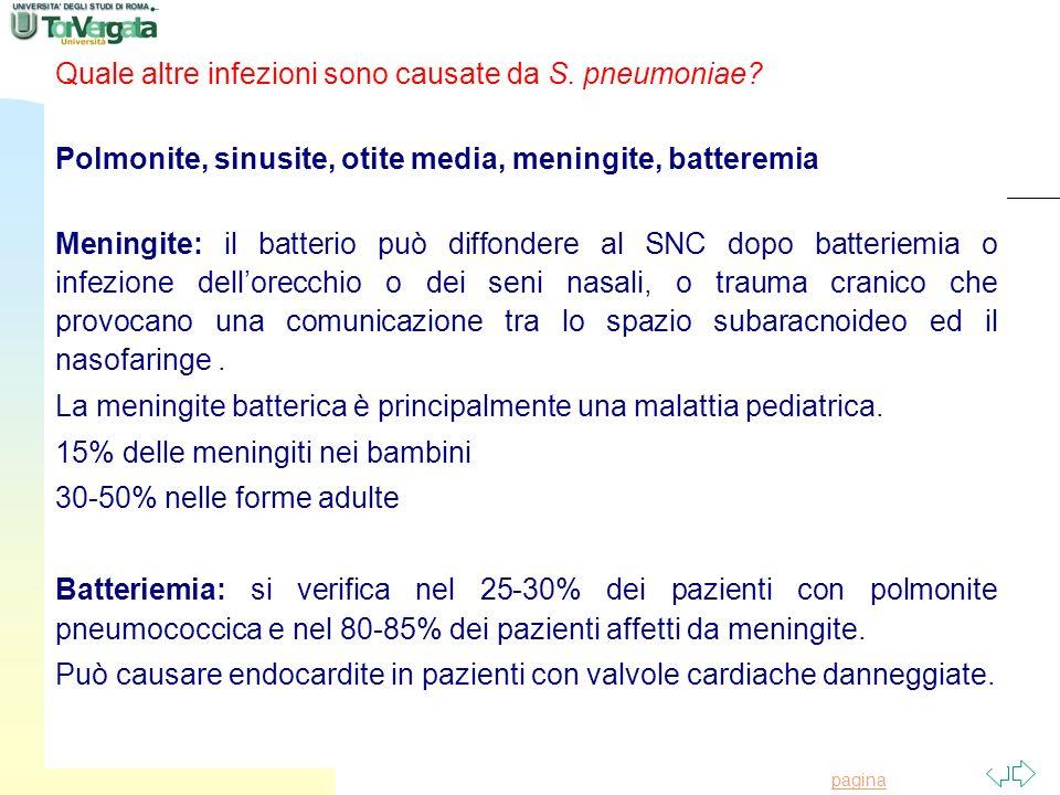 Torna alla prima pagina Quale altre infezioni sono causate da S. pneumoniae? Polmonite, sinusite, otite media, meningite, batteremia Meningite: il bat