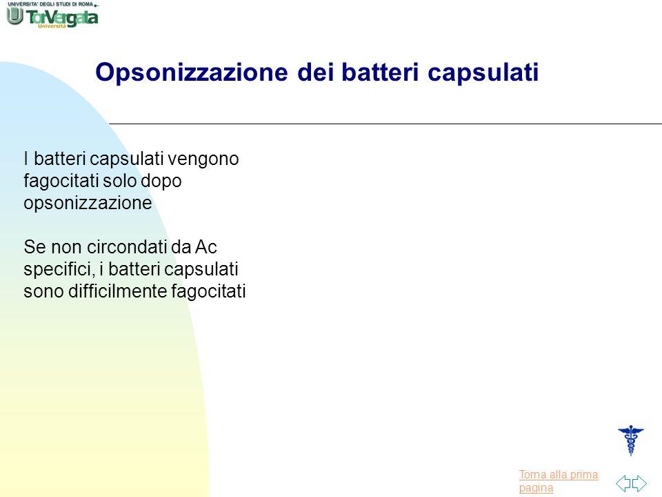 Torna alla prima pagina Opsonizzazione dei batteri capsulati I batteri capsulati vengono fagocitati solo dopo opsonizzazione Se non circondati da Ac specifici, i batteri capsulati sono difficilmente fagocitati