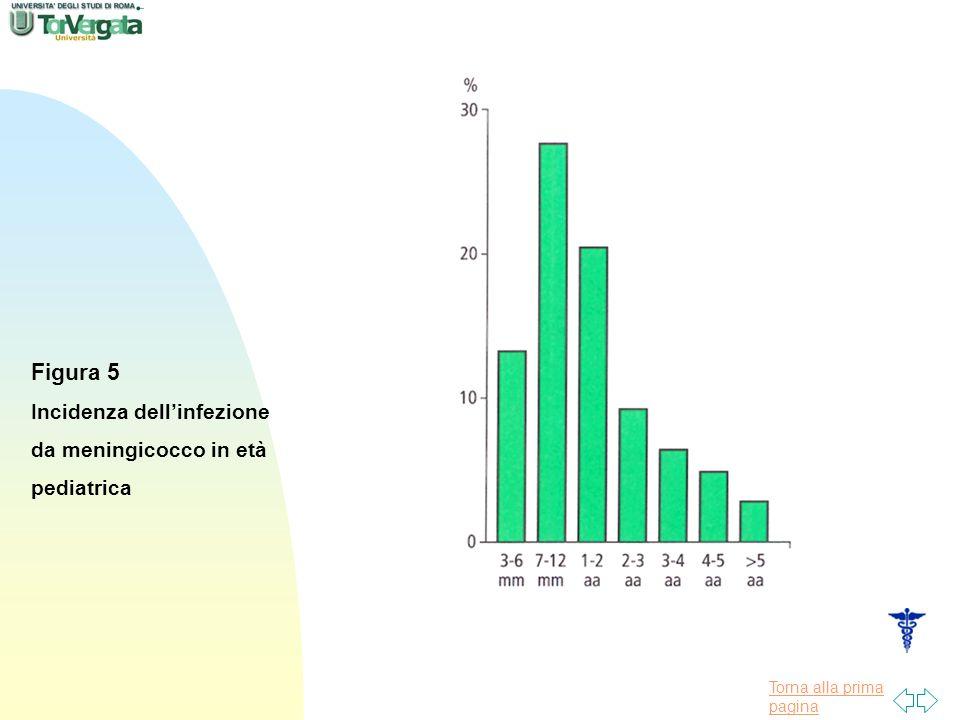 Torna alla prima pagina Figura 5 Incidenza dellinfezione da meningicocco in età pediatrica