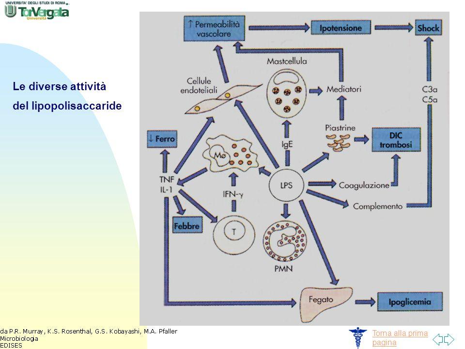 Torna alla prima pagina Le diverse attività del lipopolisaccaride