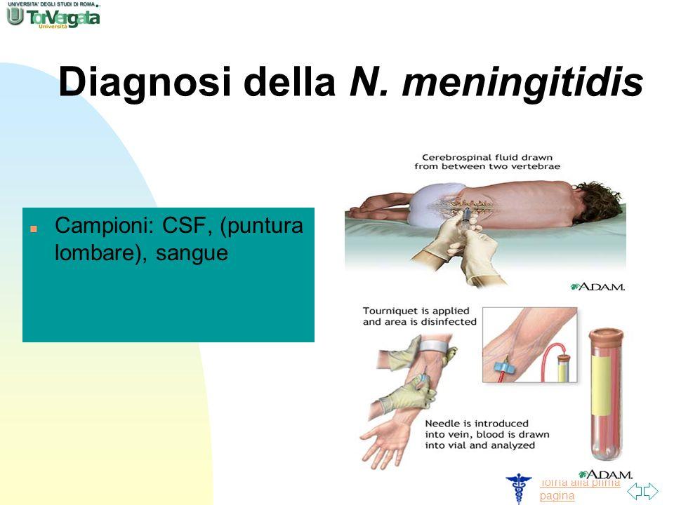 Torna alla prima pagina Diagnosi della N. meningitidis n Campioni: CSF, (puntura lombare), sangue