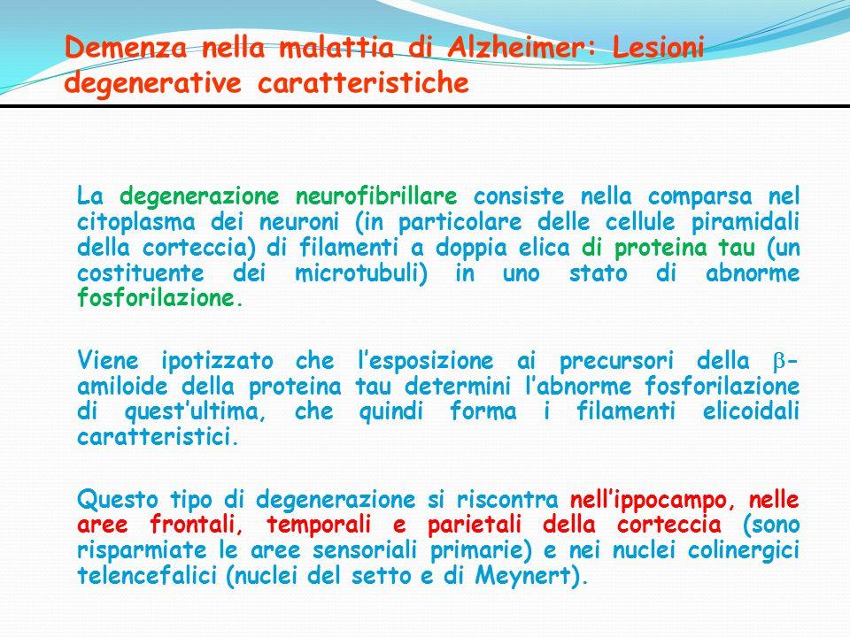 Demenza nella malattia di Alzheimer: Lesioni degenerative caratteristiche La degenerazione neurofibrillare consiste nella comparsa nel citoplasma dei