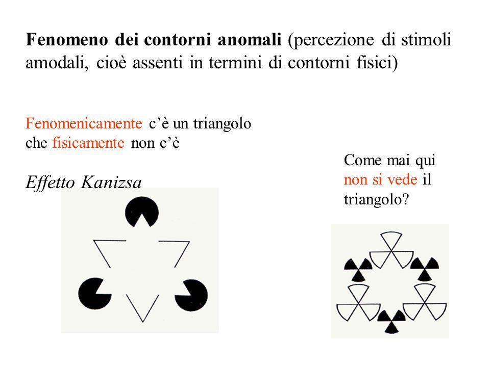 Fenomenicamente cè un triangolo che fisicamente non cè Effetto Kanizsa Fenomeno dei contorni anomali (percezione di stimoli amodali, cioè assenti in t