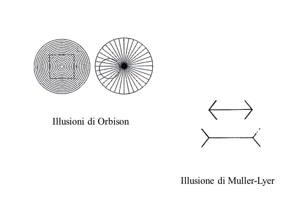 Illusione di Poggendorff Quale dei quattro segmenti obliqui riportati sulla parte destra dello schermo opaco apparente costituiscono un prolungamento del segmento posto alla sinistra dello schermo medesimo?