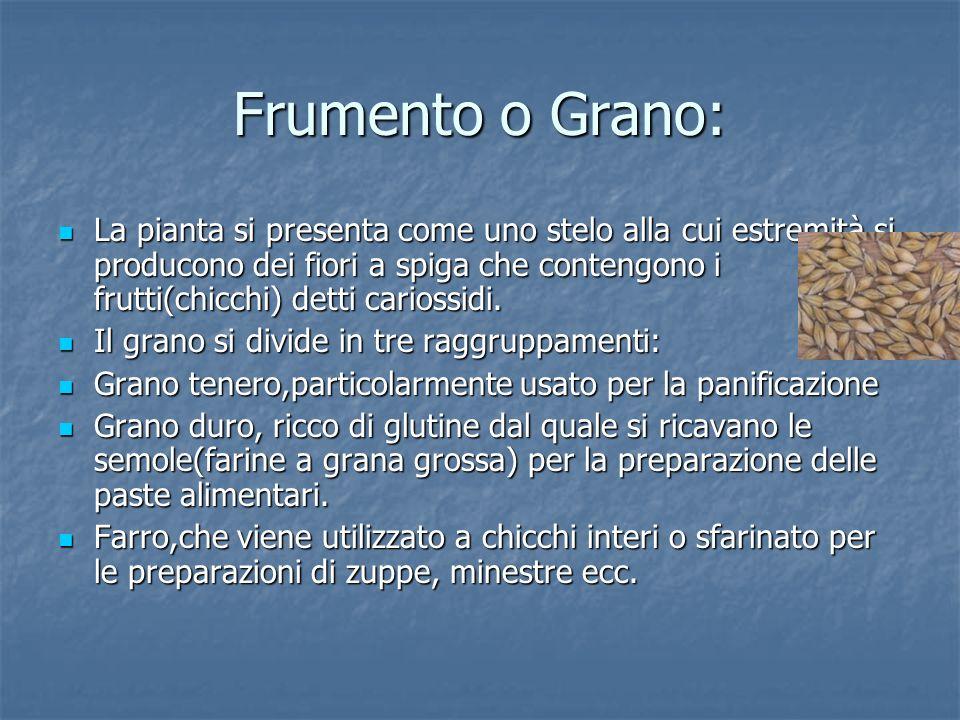 Frumento o Grano: La pianta si presenta come uno stelo alla cui estremità si producono dei fiori a spiga che contengono i frutti(chicchi) detti carios