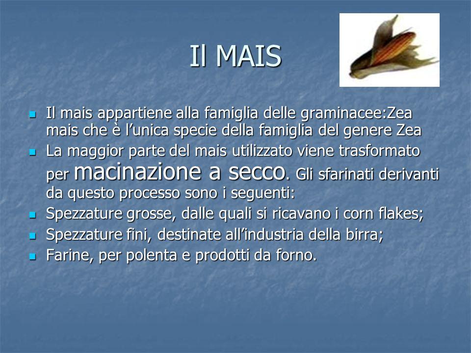 Il MAIS Il mais appartiene alla famiglia delle graminacee:Zea mais che è lunica specie della famiglia del genere Zea Il mais appartiene alla famiglia