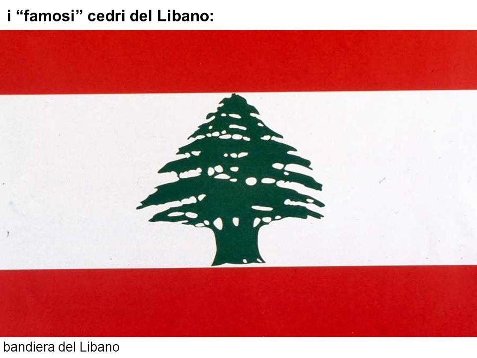 bandiera del Libano i famosi cedri del Libano: