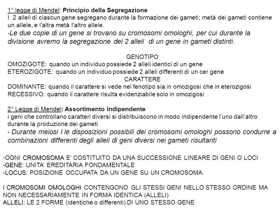 1° legge di Mendel: Principio della Segregazione I 2 alleli di ciascun gene segregano durante la formazione dei gameti; metà dei gameti contiene un al