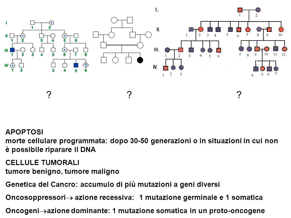 APOPTOSI morte cellulare programmata: dopo 30-50 generazioni o in situazioni in cui non è possibile riparare il DNA CELLULE TUMORALI tumore benigno, t