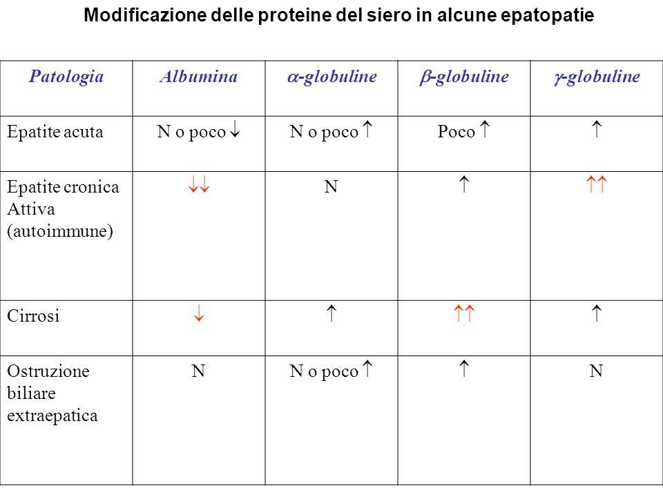Modificazione delle proteine del siero in alcune epatopatie PatologiaAlbumina -globuline Epatite acuta N o poco Poco Epatite cronica Attiva (autoimmun