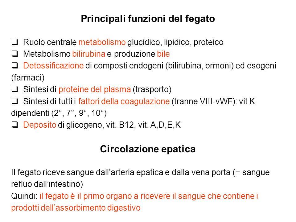 Principali funzioni del fegato Ruolo centrale metabolismo glucidico, lipidico, proteico Metabolismo bilirubina e produzione bile Detossificazione di c
