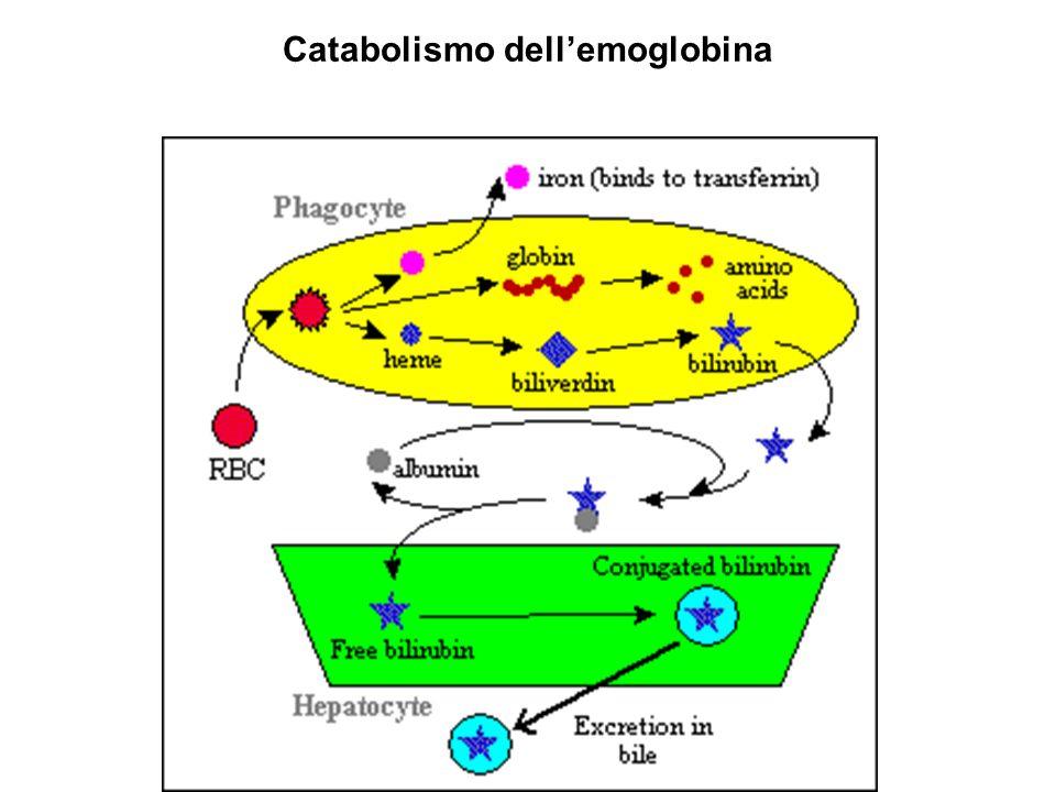 Catabolismo dellemoglobina