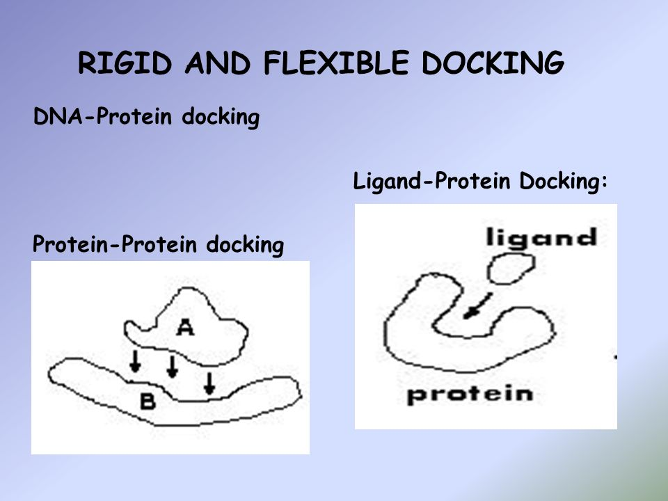 RIGID AND FLEXIBLE DOCKING Ligand-Protein Docking: DNA-Protein docking Protein-Protein docking