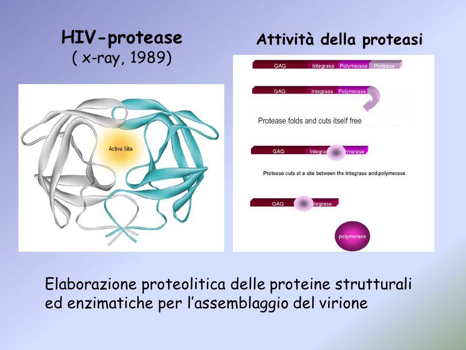 Elaborazione proteolitica delle proteine strutturali ed enzimatiche per lassemblaggio del virione HIV-protease ( x-ray, 1989) Attività della proteasi
