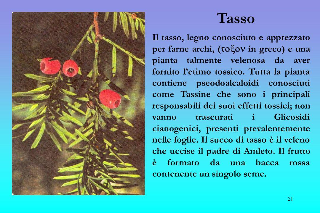 22 Fusaggine E un arbusto che può arrivare alle dimensioni di un alberello Il frutto è una capsula divisa in 4 lobi di colore rosso-arancio, che caratterizzano il suo nome popolare: capello da prete.