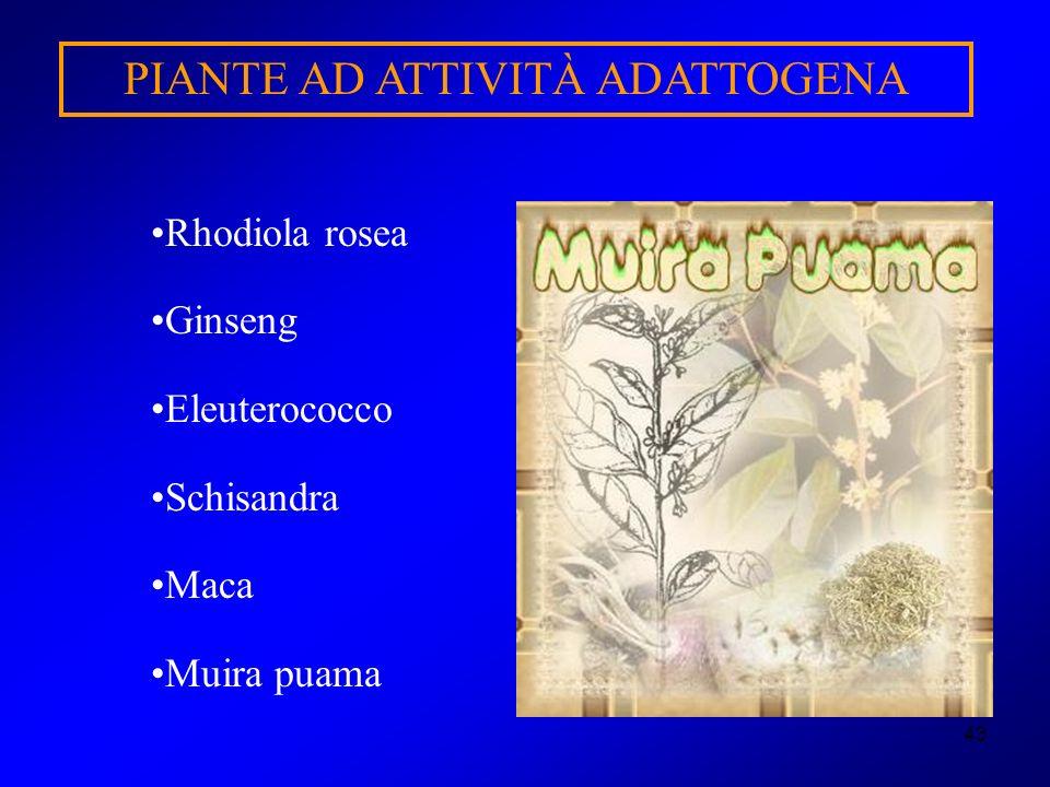 43 PIANTE AD ATTIVITÀ ADATTOGENA Rhodiola rosea Ginseng Eleuterococco Schisandra Maca Muira puama